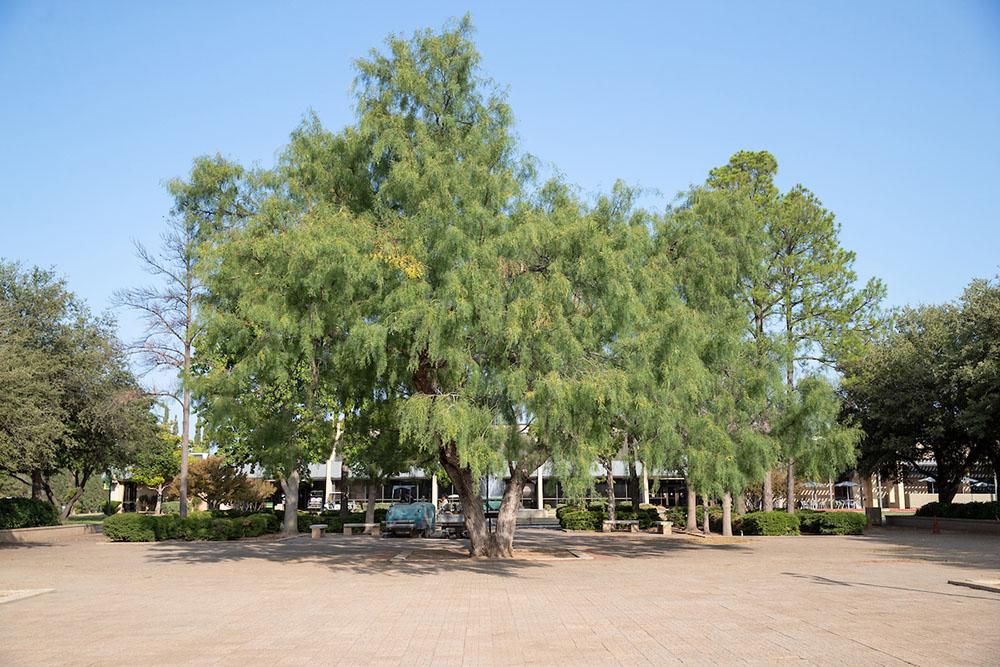 Beal Plaza