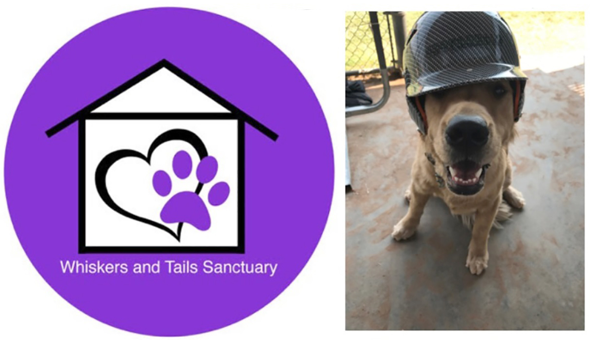 Lady Chap Softball, Phi Theta Kappa Collecting for Animal Sanctuary