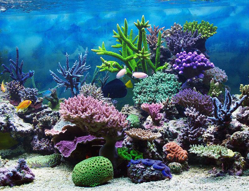 sunderwater coral